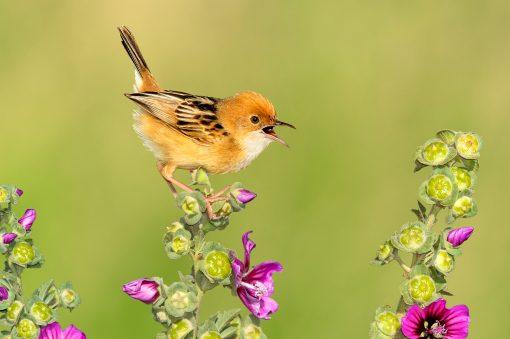 Birds nature cute super flowers