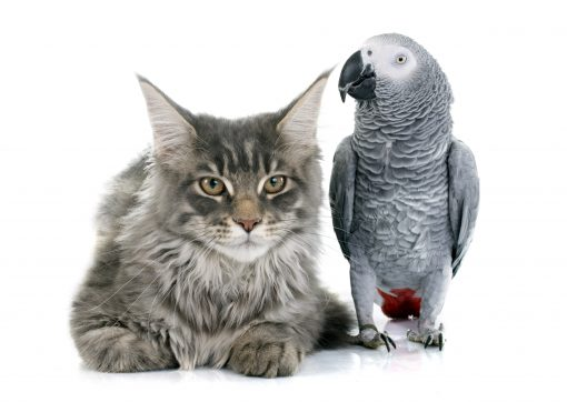 Cats_Birds_Parrots_White_background_Two_Glance_