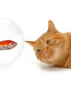 Cats Fish White background Ginger color
