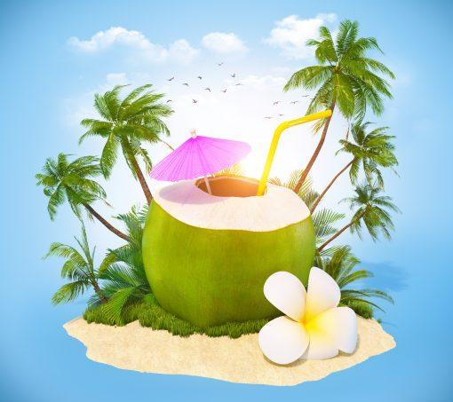 coconut sea nature