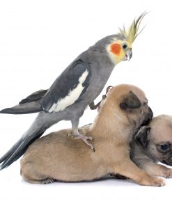 Dogs Birds Parrots White background Puppy scaled