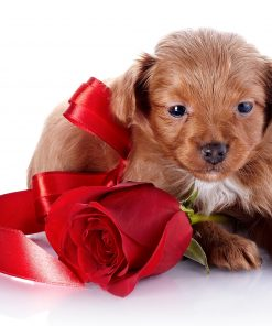 Dogs Roses White background Puppy Red Ribbon