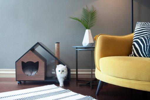 pet house cat dog puppy kitten