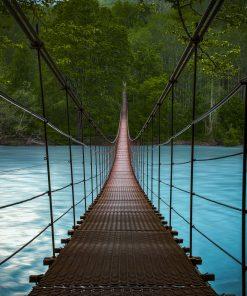 bridge water sea canopy walk blue forest