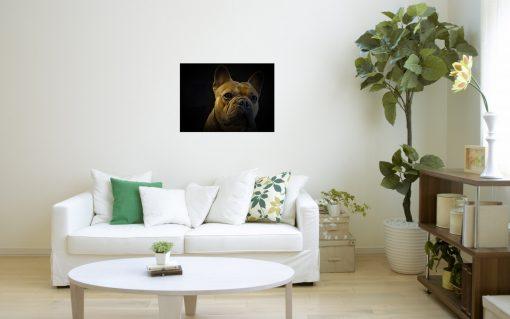 french bulldog art wall display